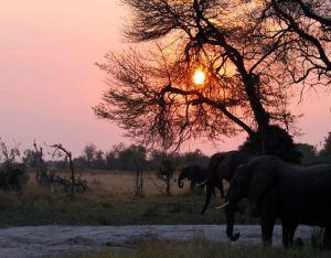 Elephants at Ol Ari Nyiro